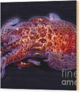 Giant Pacific Octopus Wood Print