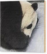 Giant Panda Portrait Wood Print