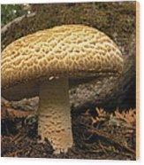 Giant Prince Mushroom Wood Print
