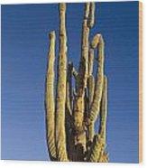 Giant Saguaro Cactus Portrait With Blue Sky Wood Print