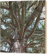 Giant Sequoias Wood Print