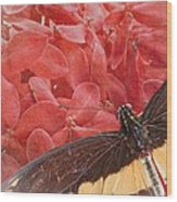 Giant Swallowtail - 3 Wood Print