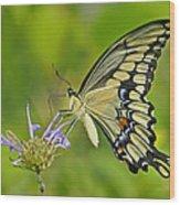 Giant Swallowtail Wood Print