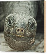 Giant Tortoise Close Up Wood Print