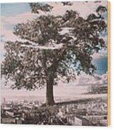 Giant Tree In City Wood Print