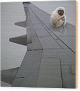 Gibbon On Wing Wood Print