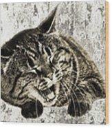 Giggle Kitty  Wood Print