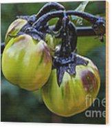 Gilo Black Stem Wood Print