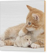 Ginger Kitten And Russian Hamster Wood Print