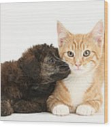 Ginger Kitten And Toy Poodle Wood Print