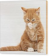 Ginger Kitten Wood Print
