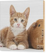 Ginger Kitten With Red Guinea Pig Wood Print