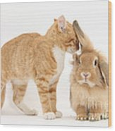 Ginger Kitten With Sandy Lionhead Rabbit Wood Print