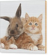 Ginger Kitten Young Lionhead-lop Rabbit Wood Print