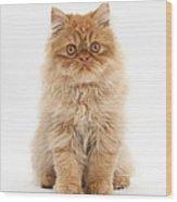 Ginger Persian Kitten Wood Print