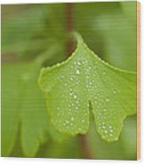 Gingko Wood Print