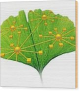 Ginkgo And Network Diagram Wood Print