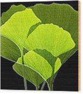 Ginkgo Leaves Wood Print by Pasieka