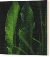 Ginsberg Wood Print