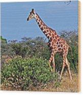 Giraffe Against Blue Sky Wood Print
