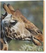Giraffe Wood Print by Alan Clifford