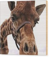 Giraffe Big Nose Wood Print