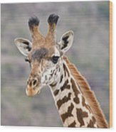 Giraffe Close-up Wood Print