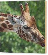 Giraffe's Tongue Wood Print