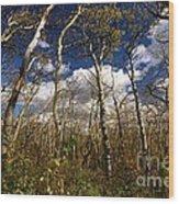 Glacier Aspens Wood Print