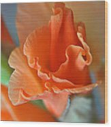 Gladiola Bloom Wood Print