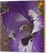 Gladiola Blossom 5 Wood Print
