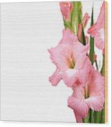 Gladioli On White Wood Print