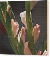 Gladiolus II Wood Print