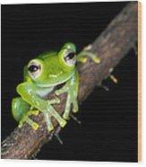 Glass Frog 02 Wood Print