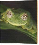 Glass Frog Centrolene Tayrona, Sierra Wood Print