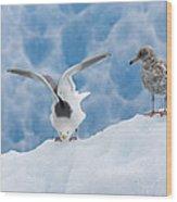 Glaucous-winged Gull Larus Glaucescens Wood Print