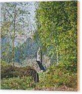 Glendalaugh 1 Wood Print