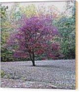 Glenna's Dogwood In The Fall Wood Print