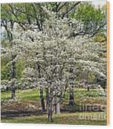Glenna's Dogwood In The Spring Wood Print
