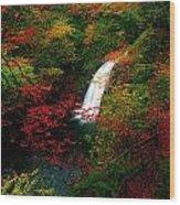 Glenoe Waterfall And Glen, Co Antrim Wood Print