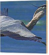 Gliding Great Blue Heron Wood Print