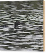 Gliding Loon Wood Print by Chris Hill