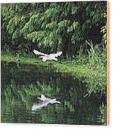 Gliding Through The Swamp Wood Print