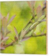 Glimpse Of Spring Wood Print