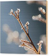 Glistening Ice Crystals Wood Print