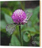 Globe Amaranth Bicolor Rose Wood Print