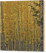 Glorious Aspens Wood Print