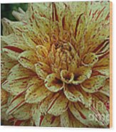 Glorious Gloriosa  Wood Print