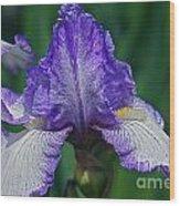 Glorious Iris Wood Print