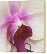 Glorious Orchid Wood Print